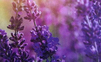 Vajanský: Nedeľa Kvetná