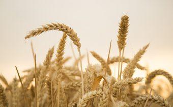 Milan Rúfus – Poďakovanie za úrodu